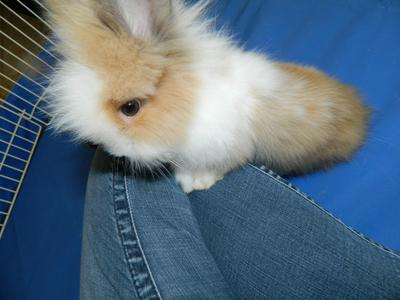 survival blog creating wellsocialized baby bunnies 21710779
