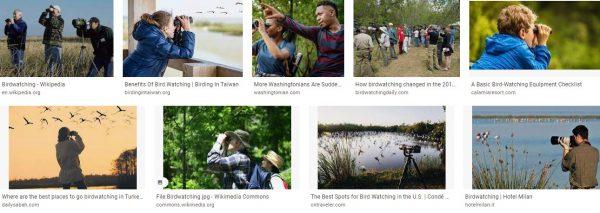 How To Start Birdwatching