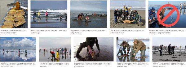 Razor clam digging oregon-clams digging-clam digging washington